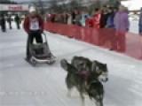 Schlittenhunderennen mit Huskies